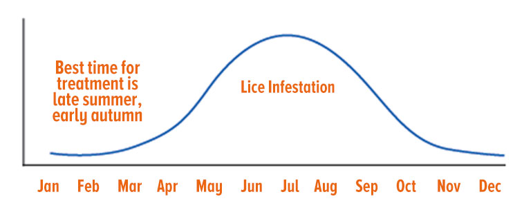 Lice infestation