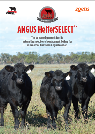 Angus_HeiferSELECT_PDF_FrontCover