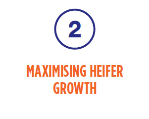 2. Maximising heifer growth